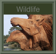 Wildlife Sculpture Gallery
