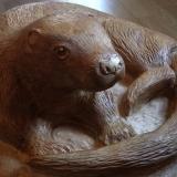 Wildlife Photo 28 - Otter